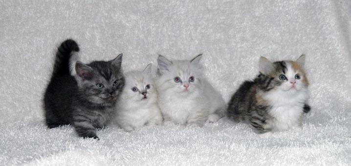 劇的に可愛いマンチカンが集まる、猫画像20選!!