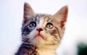 猫の年齢は?