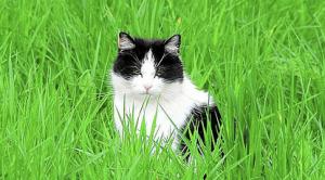 猫草の意味とその効果
