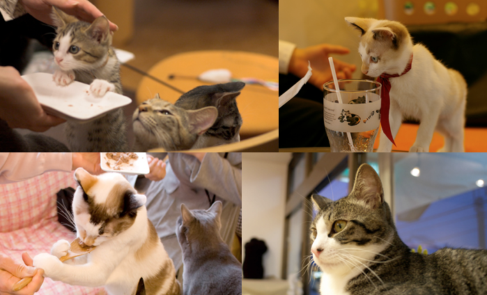 猫喫茶 ねこのみせ