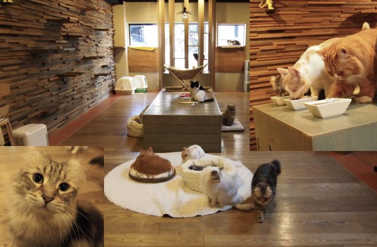 話題の猫カフェと楽しむコツまとめ