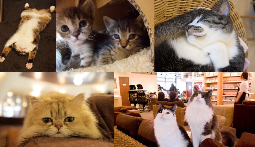 猫の居る休憩所299(にくきゅう)