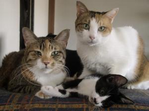 猫の種類 日本猫