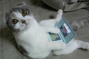 子猫の育て方