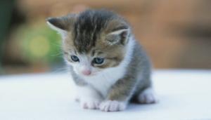 猫の病気早見表