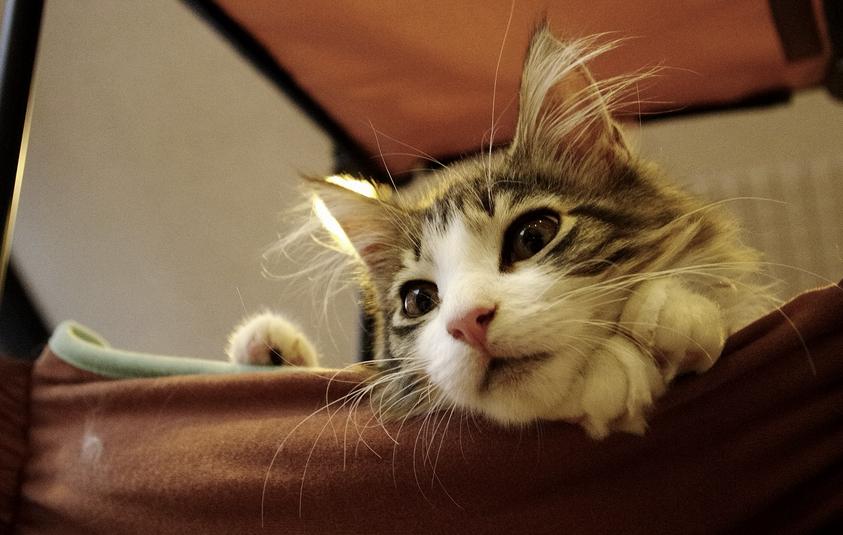 いますぐ、もふもふ♪大阪の猫カフェリスト11選☆