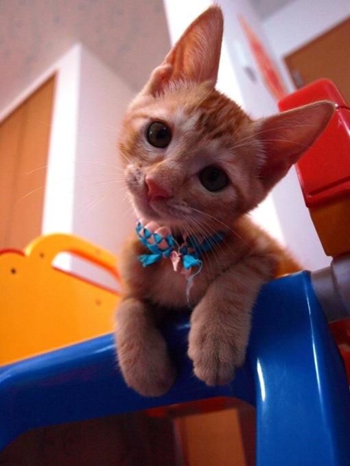 好奇心旺盛なオシキャットが集まる、猫画像20選!!