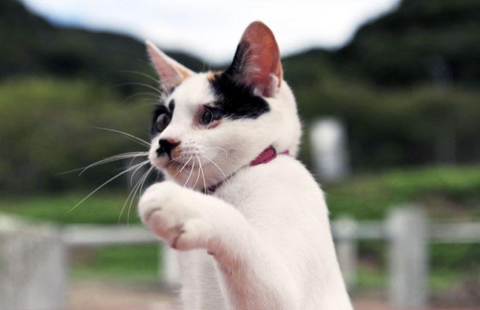 猫を飼う私達が、実は猫に飼われているかのもしれない5つの理由☆