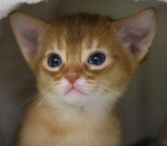 やっぱり猫が好き!と再確認してしまう猫画像20選♪