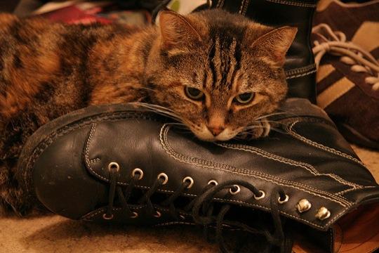 自分のことをまるで猫だと思っていない、猫画像30選☆