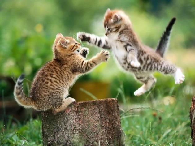 わがまま猫の更生塾☆5つの猫のしつけ方!
