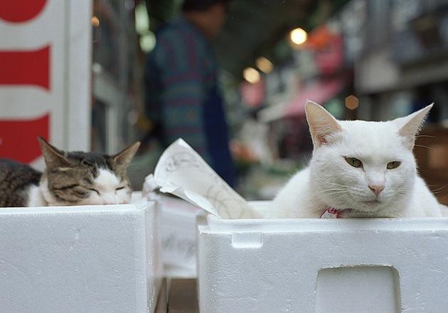知っておきたい猫の寿命・老猫と仲良く暮らす5つの方法