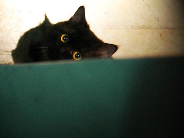 下から覗く黒猫