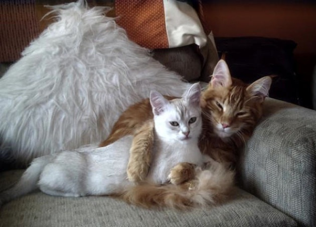 おいおい、おまえは人間か?と突っ込みたくなるおもしろ猫画像25選!!