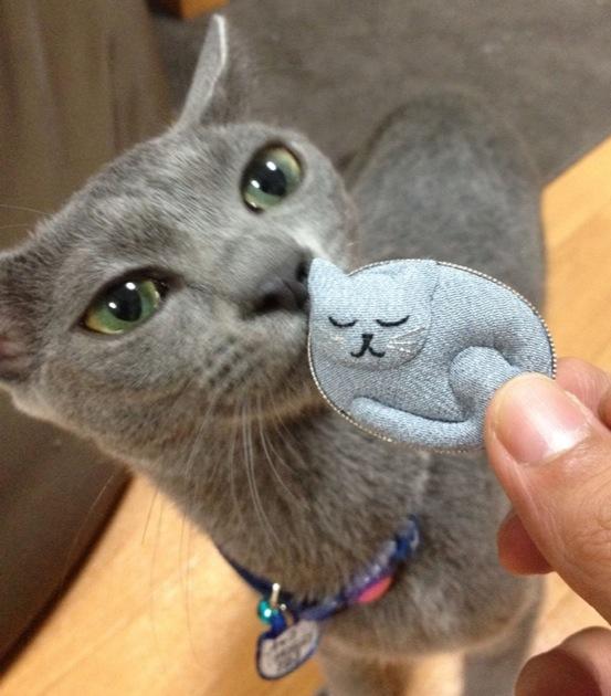 内気だけど甘えん坊なロシアンブルーの猫画像20選!!