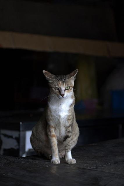 猫耳が可愛い、キュートな猫画像18選!!