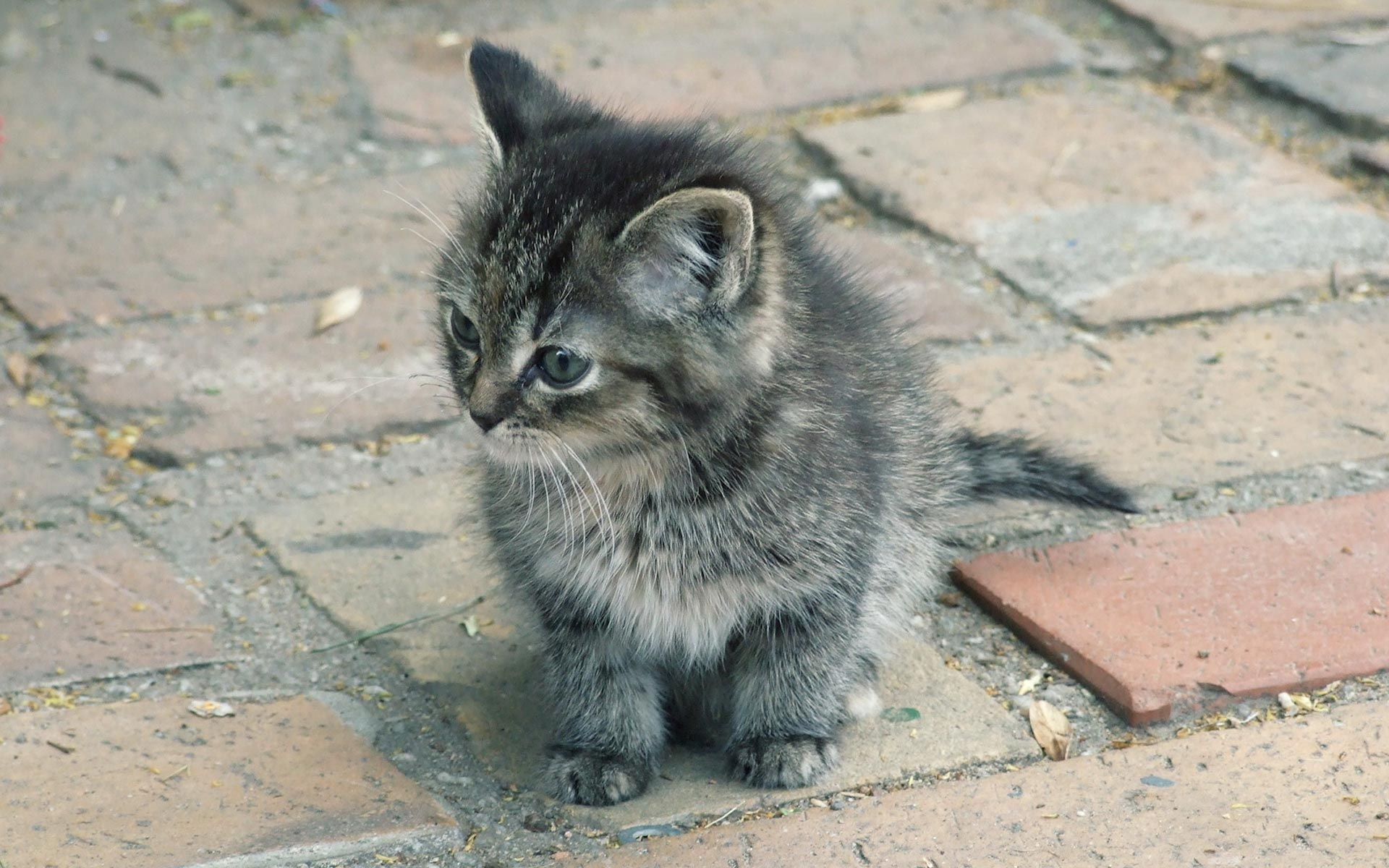猫の壁紙でデスクトップに癒しと安らぎを☆猫の壁紙・猫画像22選!!