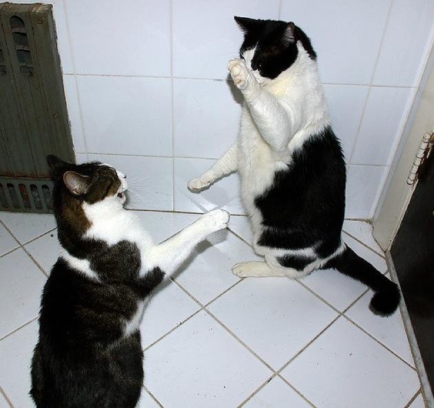 めちゃくちゃテンションが高くてアグレッシブな猫画像30選!!