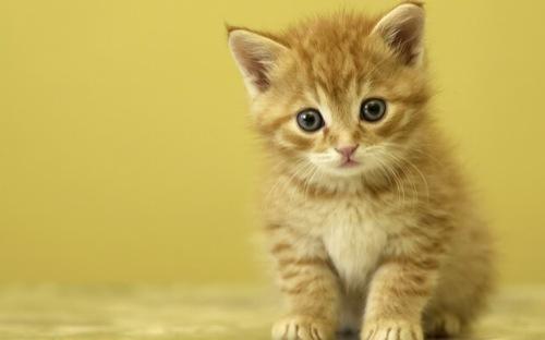 まるで天使のような子猫の画像☆猫画像25選!!