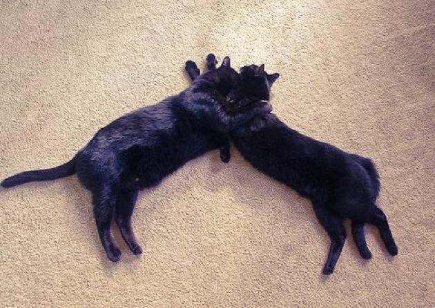 もう不吉だなんて言わせない!とっても癒される黒猫画像25選☆