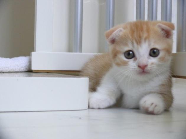 こねこが癒す!猫画像30選!!