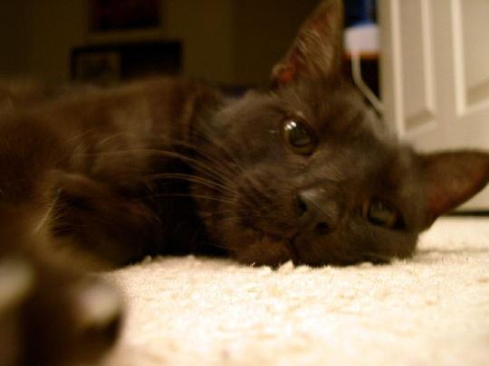 不思議な魅力の持ち主です☆キリッと可愛い黒猫画像13選!!