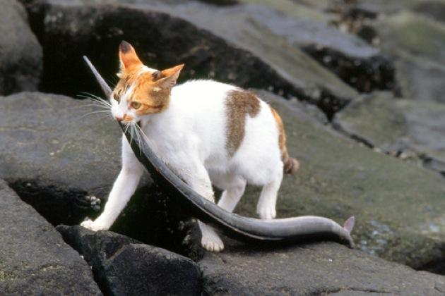 ワイルドな猫