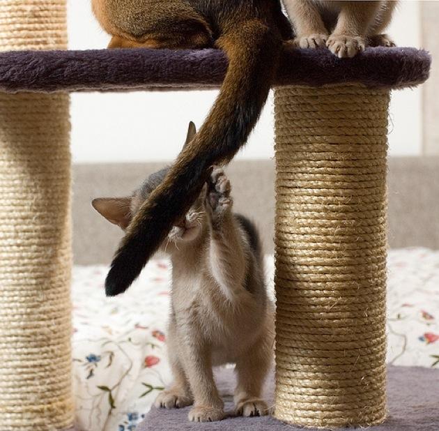 ねこのしっぽがとってもキュートな猫画像30選!!