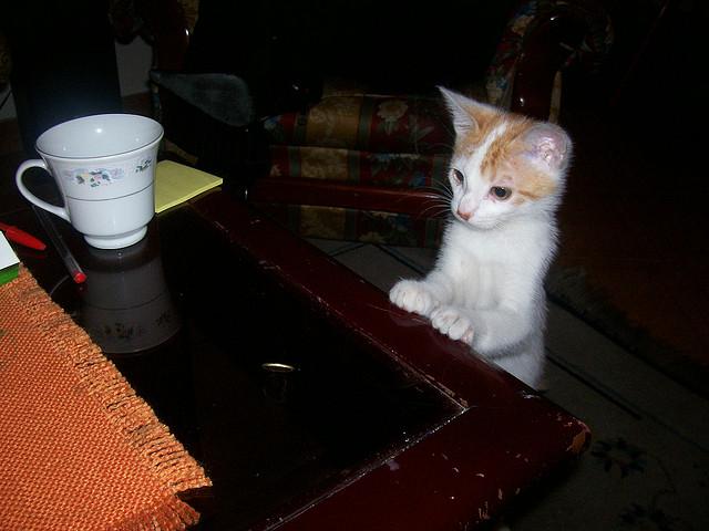 猫が繰り出す面白画像22選!!