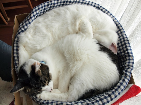 猫好きにはたまらない・超かわいい猫画像30選☆