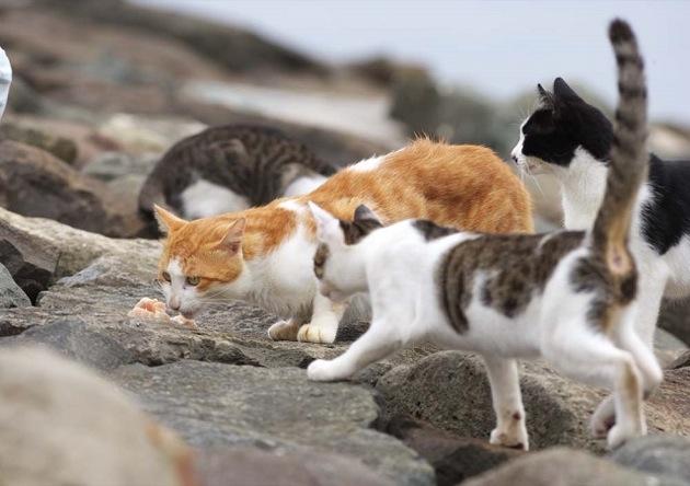 驚くほど躍動的でスタイリッシュな猫画像17選!!