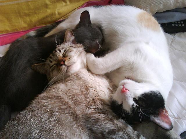 知っておきたい猫年齢☆猫の年齢を理解する3つの方法