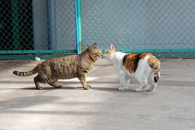 猫でもやっぱり猫それぞれ☆5つの猫の性格パターン♪