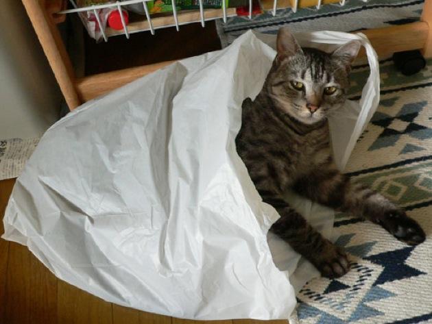 俺たちキジトラ、ちょっとツンデレな猫画像20選!!