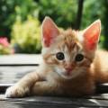こねこって恐ろしく可愛いと思える猫画像15選!!