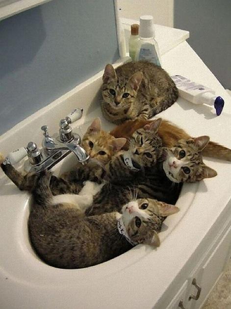 おもわず2度見してしまう、、、おもしろ猫画像18選!!