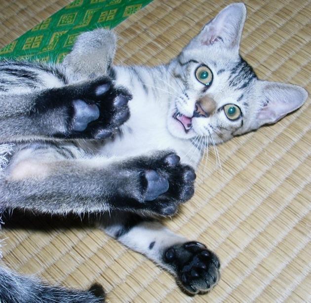 かわいくて自由気ままな猫ちゃん、そんなあなたが大好きです!!だけど・・・いつもいたずらはやっぱり困るんです!!わがままもいつもはつきあってあげられません。そんなわがまま猫ちゃんを更正させるための5つのしつけ方法をご紹介します♪