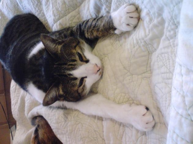 猫だって病気になる・知っておきたい猫の5大病とその対策