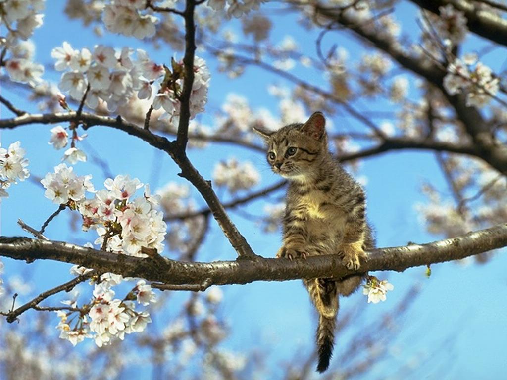 桜と猫の画像