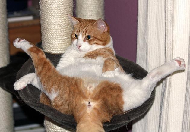 これでご機嫌♪猫の気持ちを理解する5つの方法☆