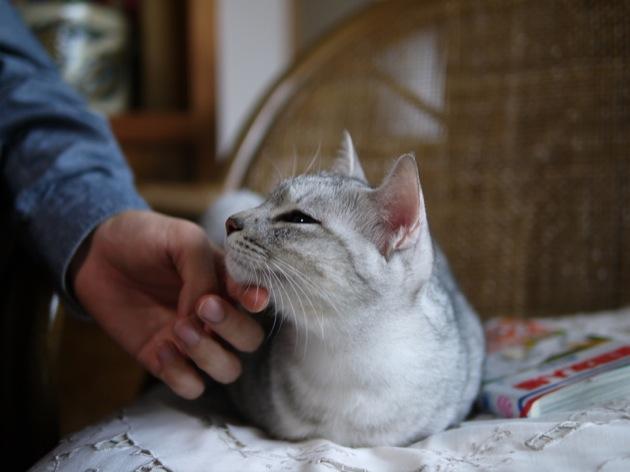 案外個性的な猫の鳴き声一覧