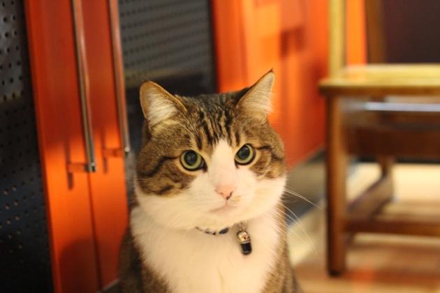 やっぱこれだね、安定の日本猫が集まる、猫画像20選!!