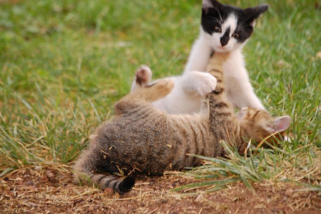 初心者でもわかる、元気な子猫の育て方、5ステップ☆