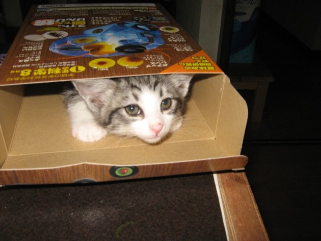 なぜ猫は猫草を食べるのか?猫草の意味と5つの効果