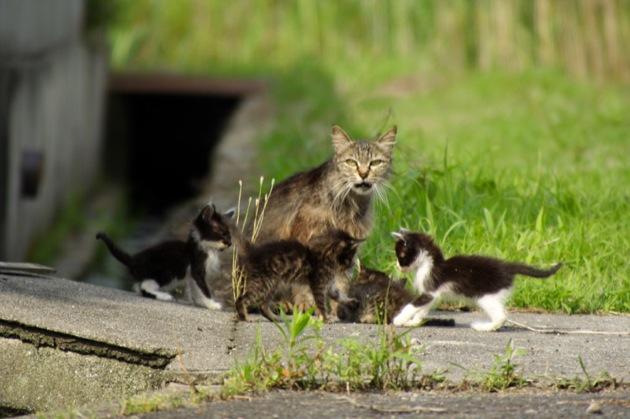 知っておきたい、猫の発情期と5つの完璧対応策☆