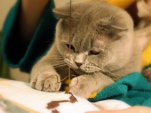 気を抜いたら恋に落ちてしまいそうなくらい可愛い猫画像30選☆