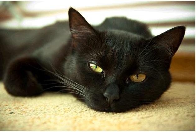 眠そうな黒猫