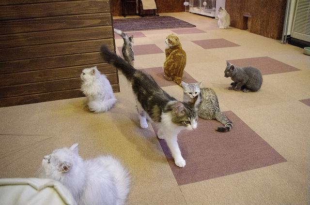 猫カフェで、きゃっきゃと遊び回る、いたずら猫画像20選!!