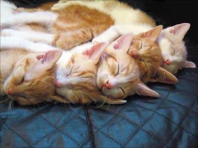 おもわず吹き出してしまいそうになる、おもしろ猫画像30選!!