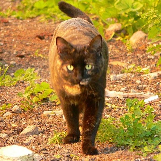 マニアックで可愛い、サビ猫の猫画像20選!!